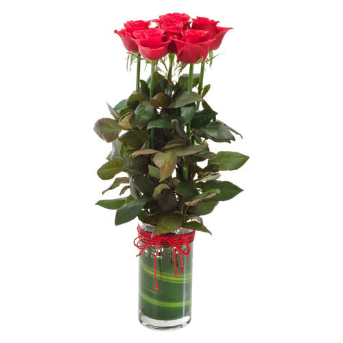 Red roses presented in a glass vase