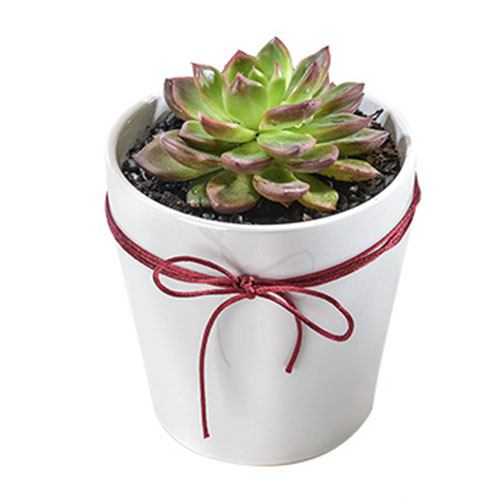 Small succulent plant in pot