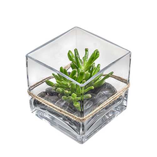 Small succulent in square glass vase