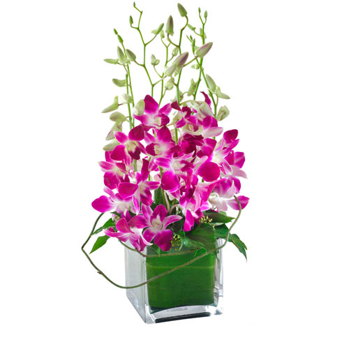 Orchids in Glass Cube